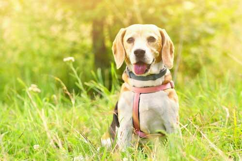 Aprende con perros y de perros